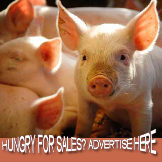 ACT Ad Pig